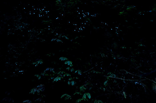 RtW2009 999 Free glowworms - Woodland walk near Waitomo | by mothclark62