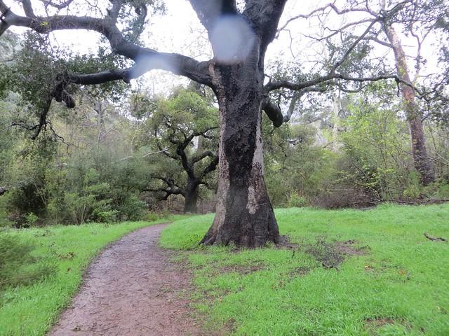 epic rain, dry tree