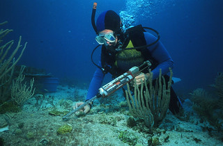 Restoring a Reef | by NOAA's National Ocean Service