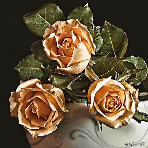 Just three roses .. | by Rebeca Mello