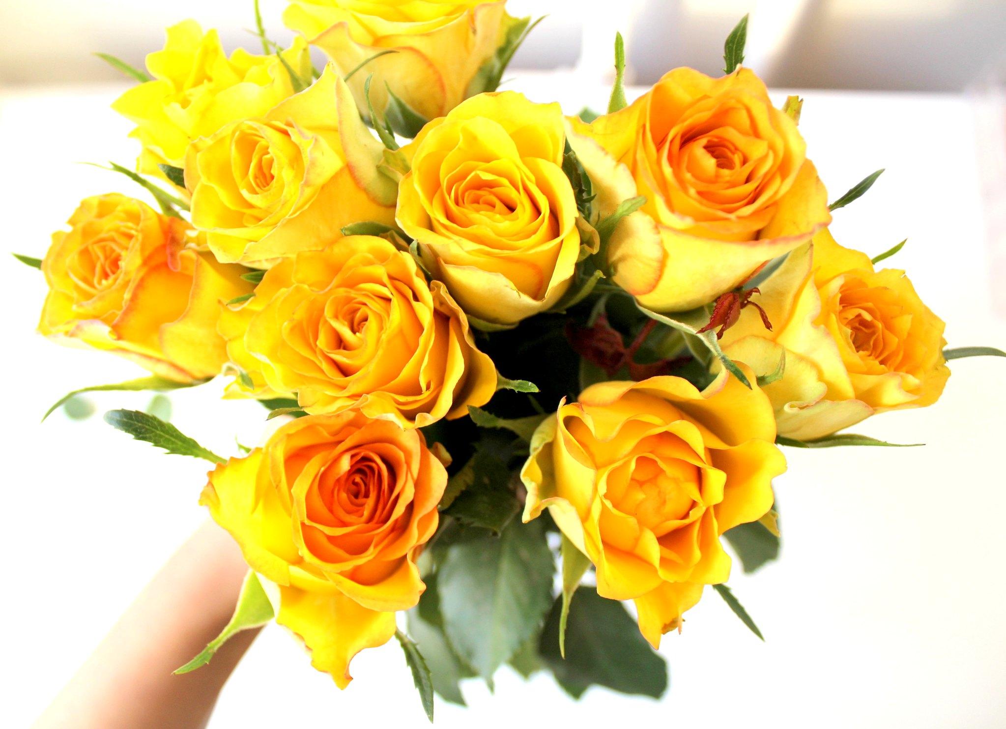1 Ruusut