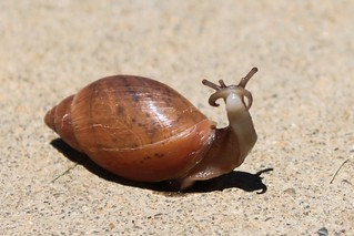 Snail | by That_Bee