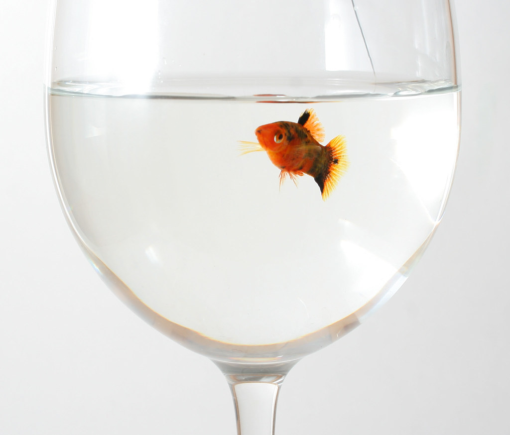Fish in wine glass colin knowles flickr for White wine with fish