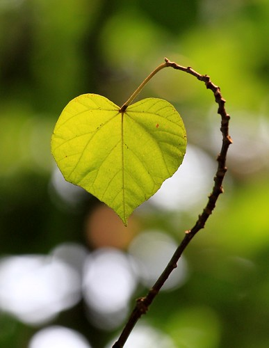 my heart for you, my Flickr friends ..... | by kyuen13