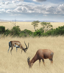 Once Upon a Time in Kenya - 2 - | by Ben Heine