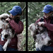 Fluffy white dogs do not good hikers make