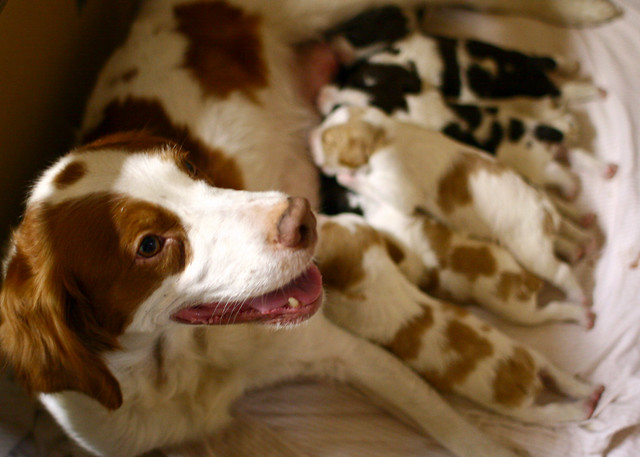Is Kirkland Puppy Food Good For Large Breeds