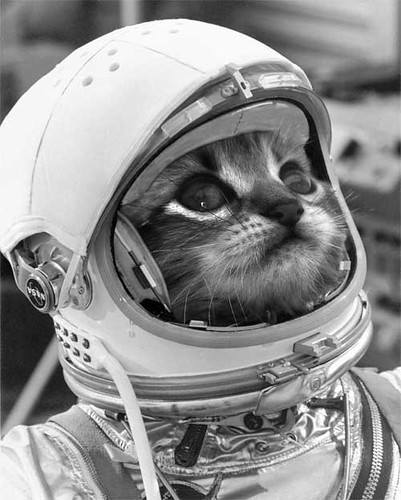 Astro Cat is Go! | Meow, I'm gonna have to give you a ...