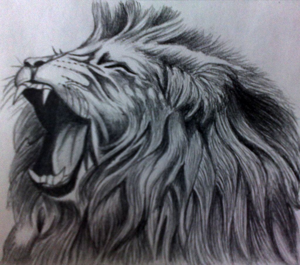 Roaring Lion | pencil drawing | lhel33246 | Flickr - photo#11