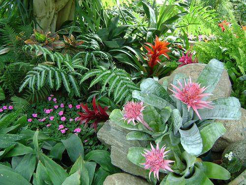 Tropical plants in edmonton tropical pyramid in the for Arreglar el jardin de casa