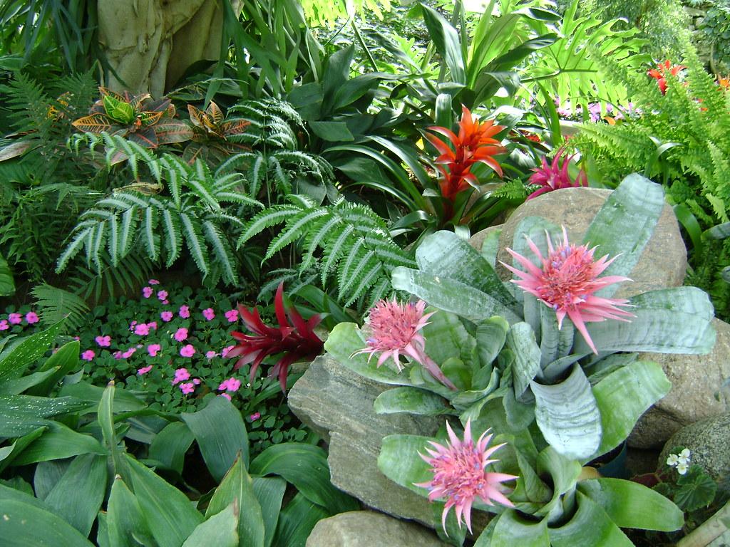 Tropical plants in edmonton tropical pyramid in the - Plantas tropicales de exterior ...