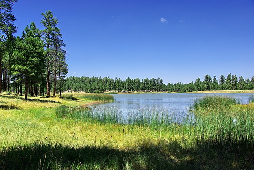 White horse lake from east kaibab national forest flickr for Fishing in williams az