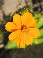 Koh Tao Flower
