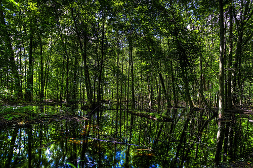Michigan Wetland HDR | by hz536n/George Thomas