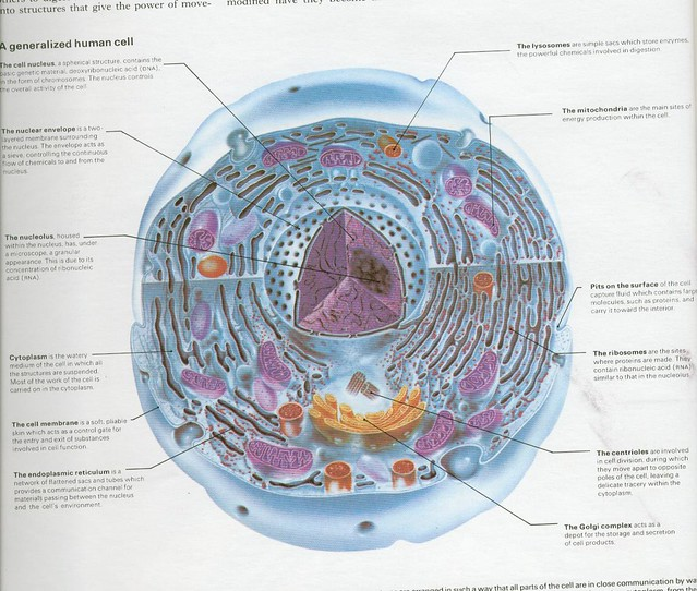 a generalized human cell adrigu Flickr