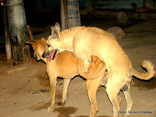 do dogs show courtship vs dating