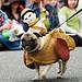chariot pug