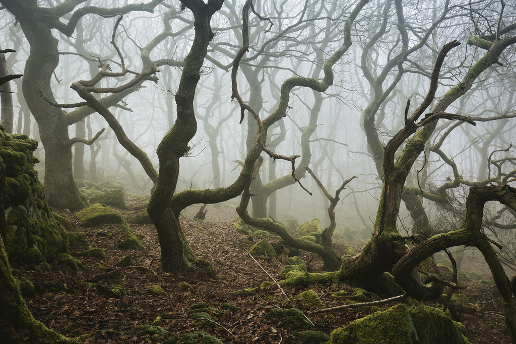 Wildwood 2