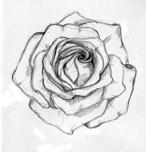 Bleistiftzeichnung Rose: A Friend Asked Me To Sketch Out For A Tattoo