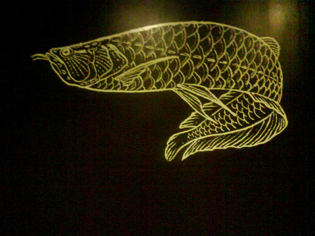 Arowana Drawing Which I Quite Liked Went To The