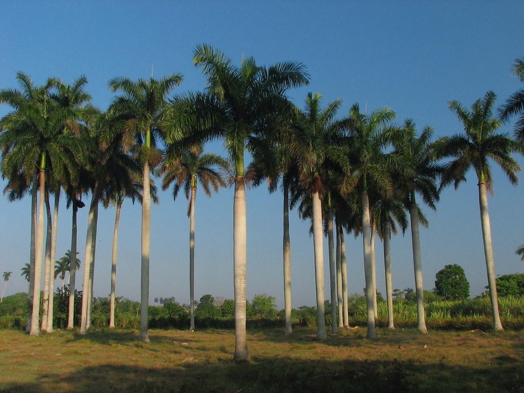 The Royal Palm Miami Beach
