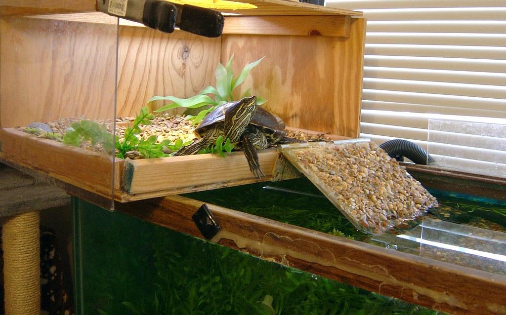 Как можно сделать островок для красноухой черепахи своими руками 549