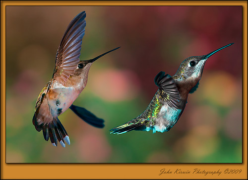 Hummer-Pair | by kirwinj