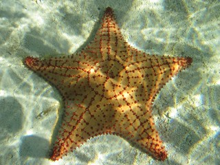 Reverse Starfish | by Mike Miley