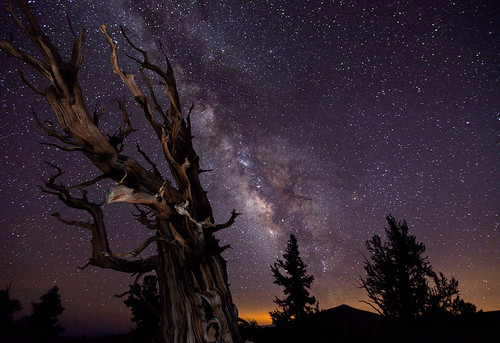 Blazing Bristlecone | by Tom Lowe @ Timescapes