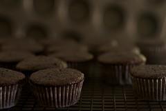 Chocolate Salted-Caramel Mini Cupcakes