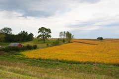 Iowa fields September afternoon | by OlyaA (busy)