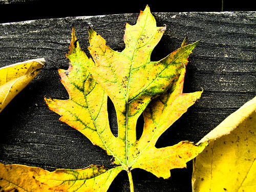 When autumn leaves start to fall... | by Donna Will