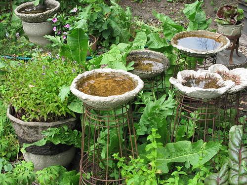Vicki Nowicki 39 S Garden The Garden Is Buzzing With