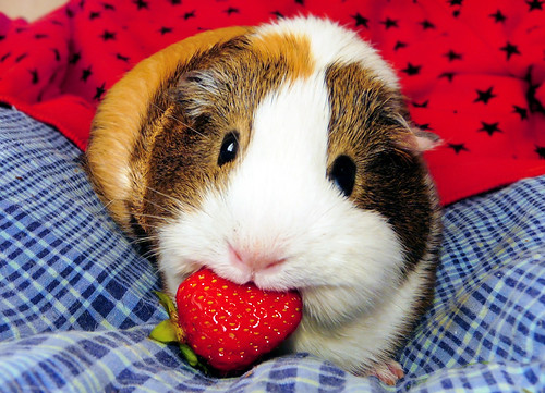Yummy Strawberry! ~ Balbinka | by pyza*