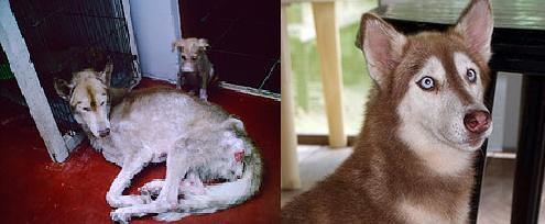 Bella Before And After Antes Y Despues Www