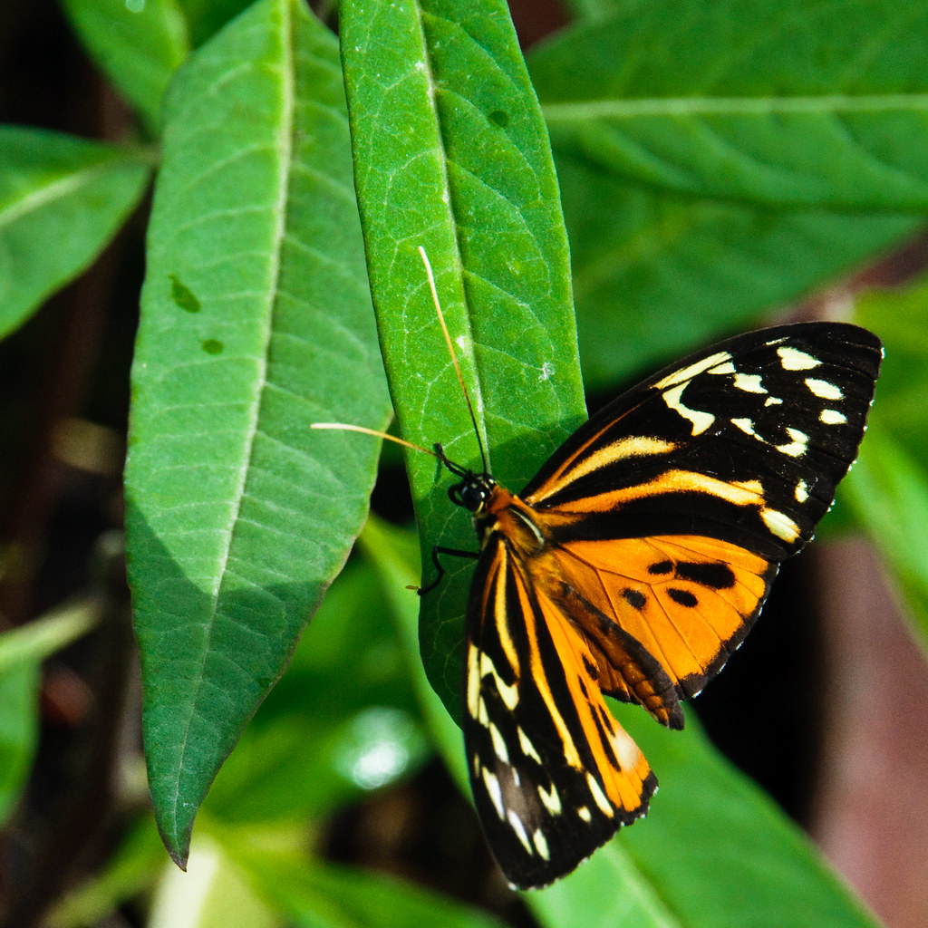 Butterfly world coupons discount