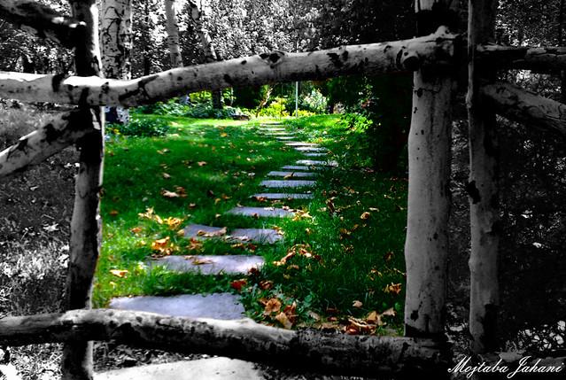 قاب عکس زندگی Mellat Park Mashhad Mojtaba Jahani