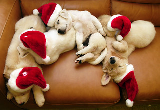 sleeping santa dogs | by chotda