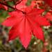 Autumn in the Cascades 5252