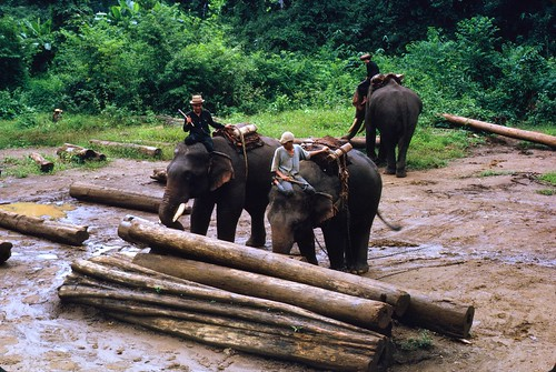 Elephant Logging Stock Photos & Elephant Logging Stock Images - Alamy