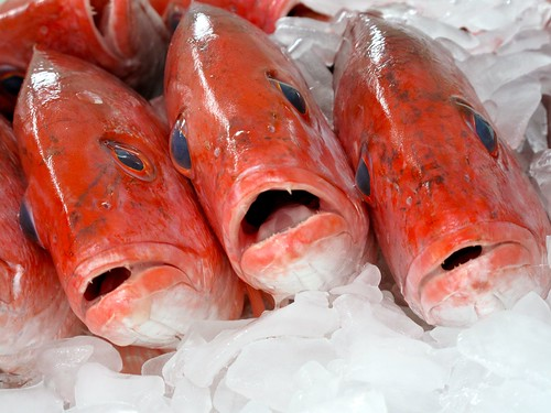 Fish faces | by J Dailey