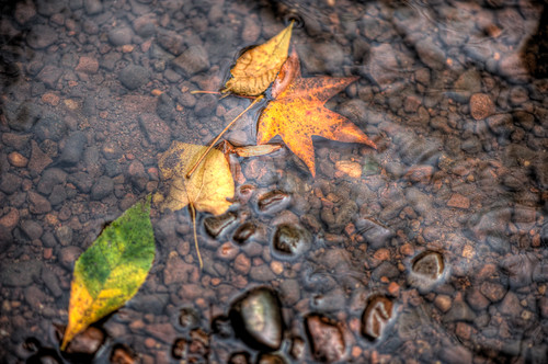 Leaves on Water | by scottwyden