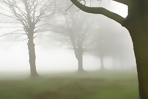 Foggy Avenue | by algo