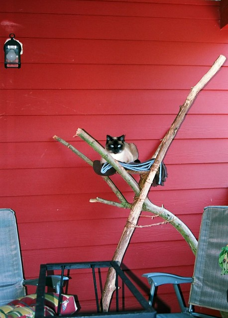 Siamese cat on her throne home made tree house for the for Cat tower with hammock