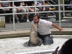 Gator Show at Gatorland | by Angie [A Whole Lot of Nothing]