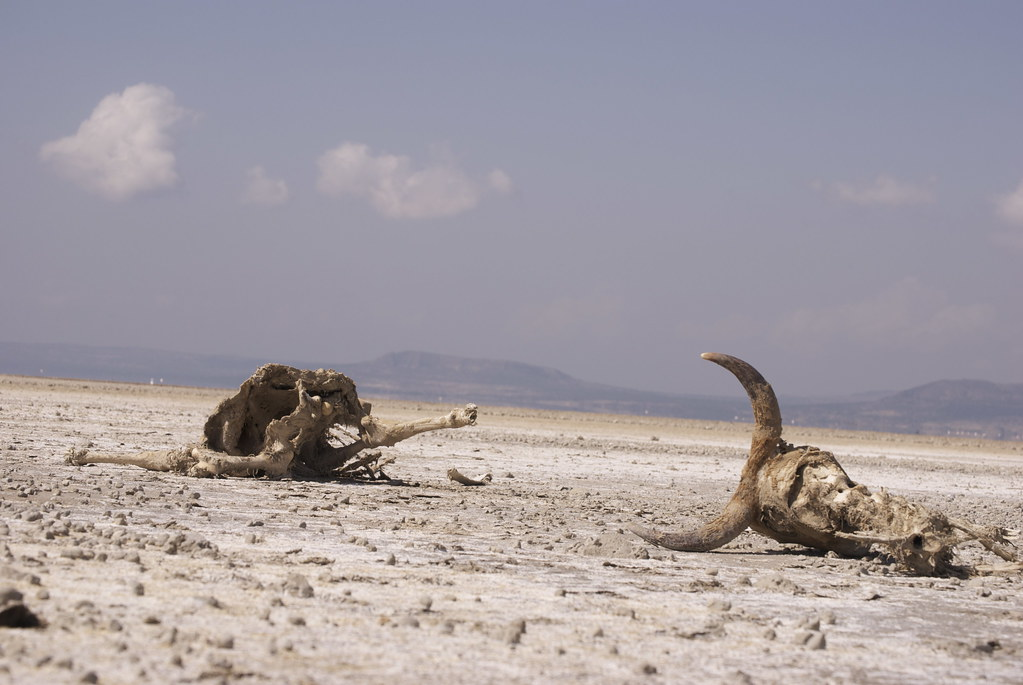 Get Free Credit Report >> Cattle killed by the drought, Ethiopia   Cattle die in the d…   Flickr