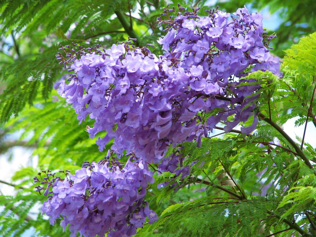 Flowering Trees s