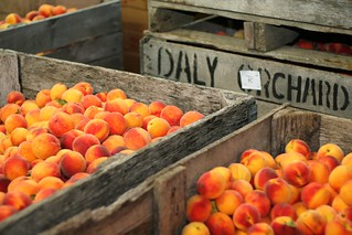 daly's peaches | by Megan | American Spoon