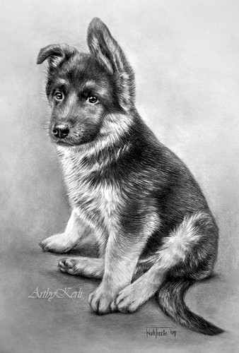 Effer | Pencil drawing of a German Shepherd on A4, year ...