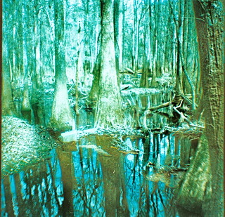 Congaree Swamp | by kwforder